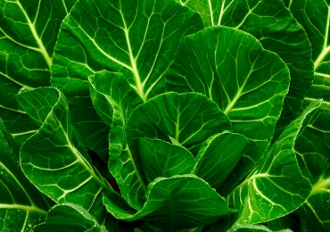 Benefits of Leafy Greens on the Candida Diet
