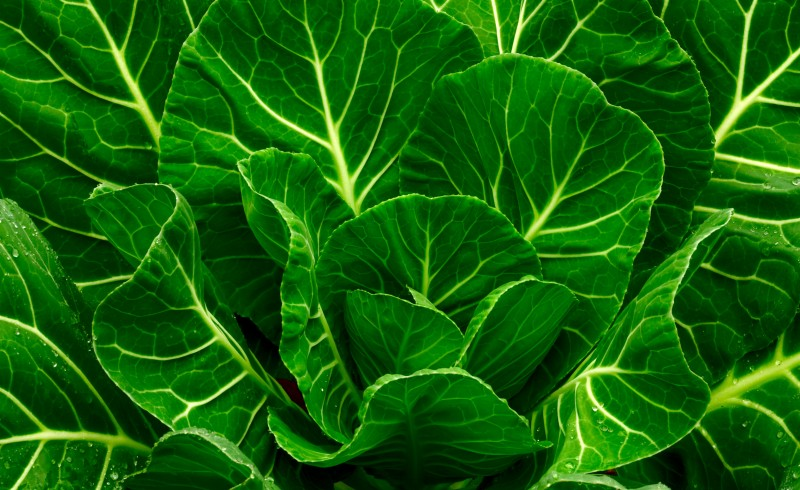 Health Benefits of Leafy Greens on the Candida Diet